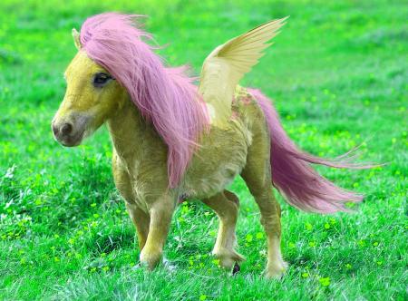 wish-pony